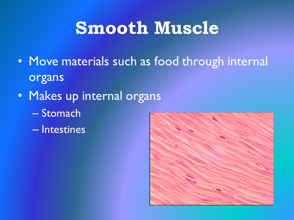 Smooth Muscle Move materials such as food through internal organs Makes up internal organs – Stomach – Intestines