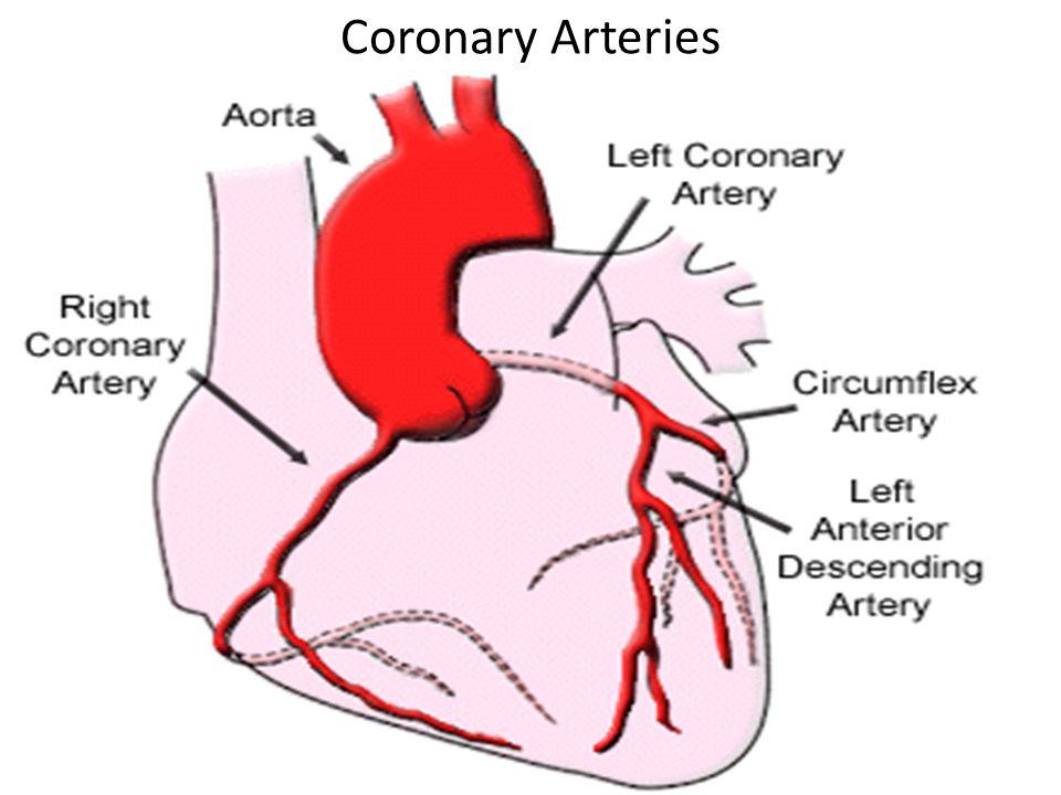 Acute Management of Angina Diagnostic Tests – EKG – CXR – Cardiac Enzymes, CBC, and BNP – Coronary Angiography – Echocardiogram