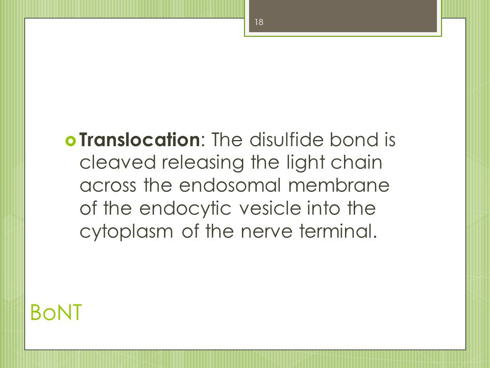 BoNT  Translocation : The disulfide bond is cleaved releasing the light chain across the endosomal membrane of the endocytic vesicle into the cytopla