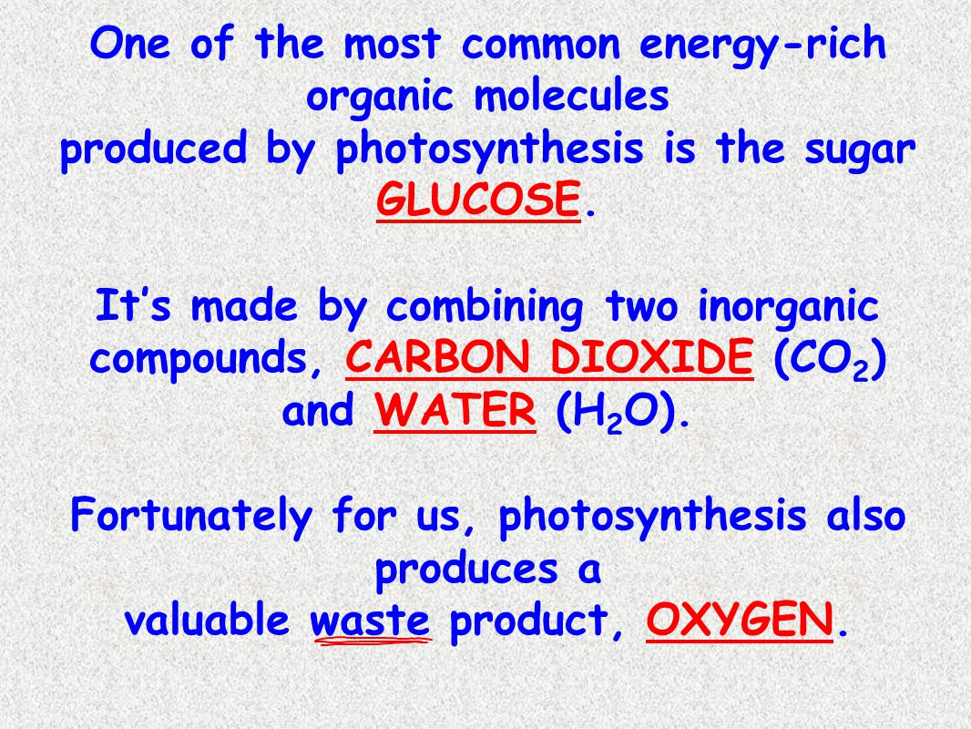 In sentence form, the reaction of photosynthesis would read: Six molecules of CARBON DIOXIDE react with 6 molecules of WATER, in the presence of LIGHT, to produce GLUCOSE and 6 molecules of OXYGEN.