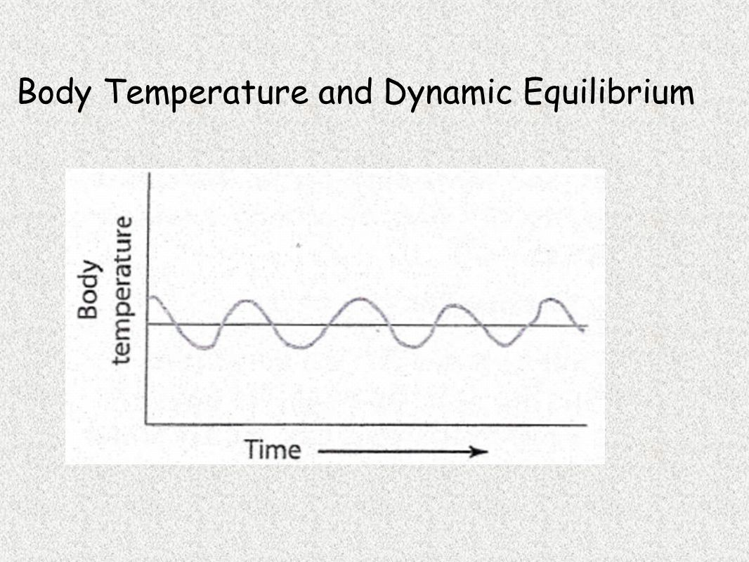 Blood Glucose Level and Dynamic Equilibrium