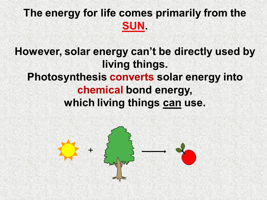 Photosynthesis requires specialized pigment molecules to capture and convert the solar energy.