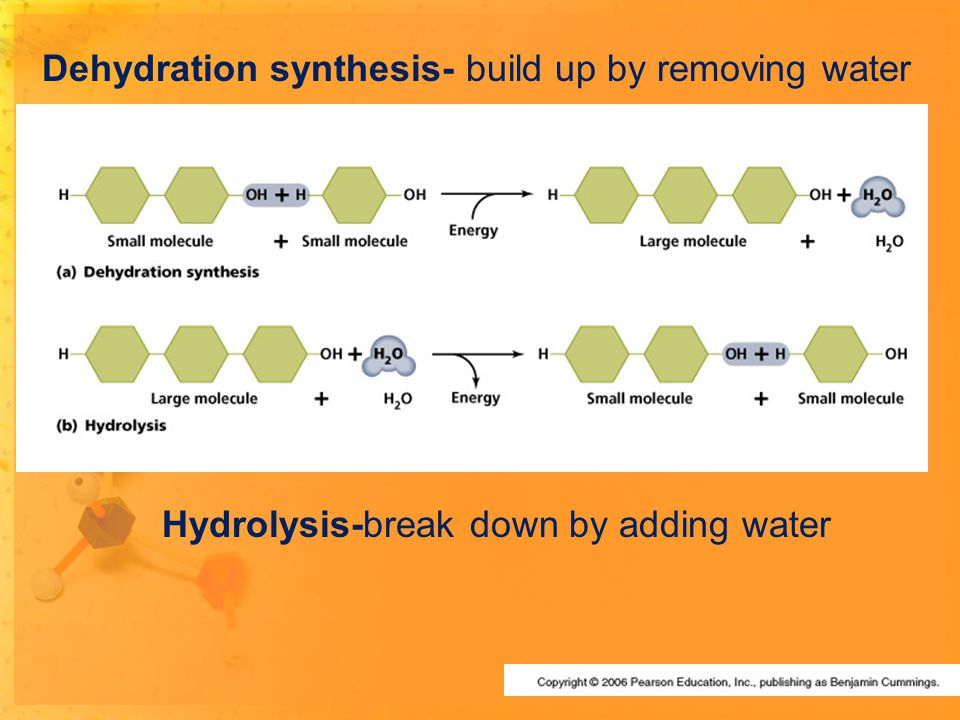 Dehydration synthesis- build up by removing water Hydrolysis-break down by adding water