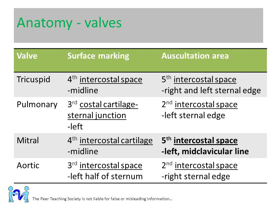 Anatomy - valves The Peer Teaching Society is not liable for false or misleading information… ValveSurface markingAuscultation area Tricuspid4 th inte
