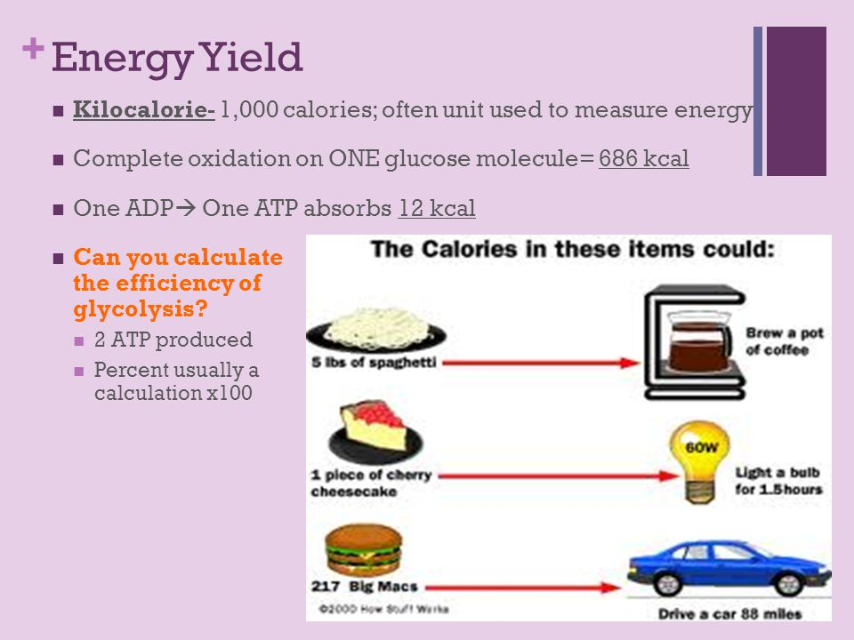 + Energy Yield Kilocalorie- 1,000 calories; often unit used to measure energy Complete oxidation on ONE glucose molecule= 686 kcal One ADP  One ATP absorbs 12 kcal Can you calculate the efficiency of glycolysis.