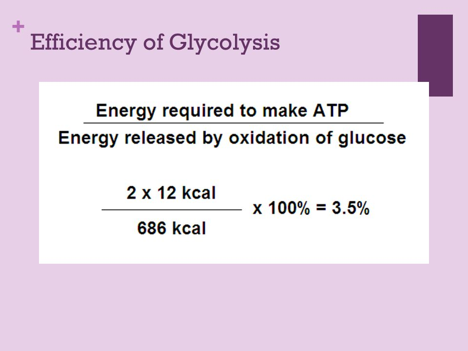 + Efficiency of Glycolysis