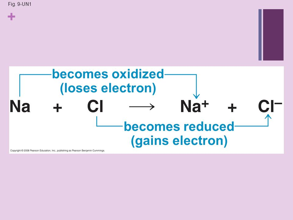 + Fig. 9-UN1 becomes oxidized (loses electron) becomes reduced (gains electron)