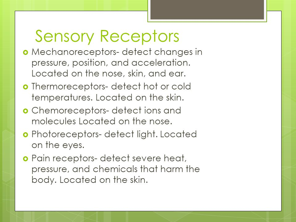 Sensory Receptors  Mechanoreceptors- detect changes in pressure, position, and acceleration. Located on the nose, skin, and ear.  Thermoreceptors- d