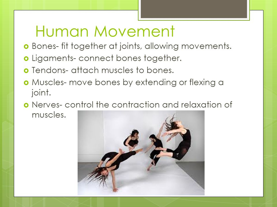 Human Movement  Bones- fit together at joints, allowing movements.  Ligaments- connect bones together.  Tendons- attach muscles to bones.  Muscles