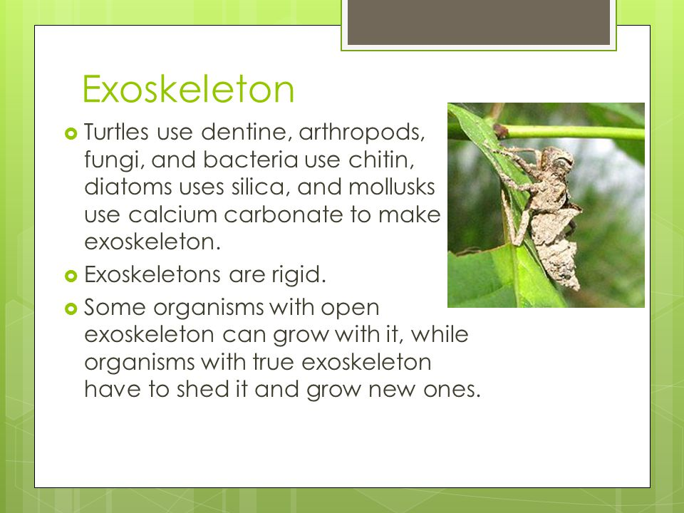 Exoskeleton  Turtles use dentine, arthropods, fungi, and bacteria use chitin, diatoms uses silica, and mollusks use calcium carbonate to make exoskel