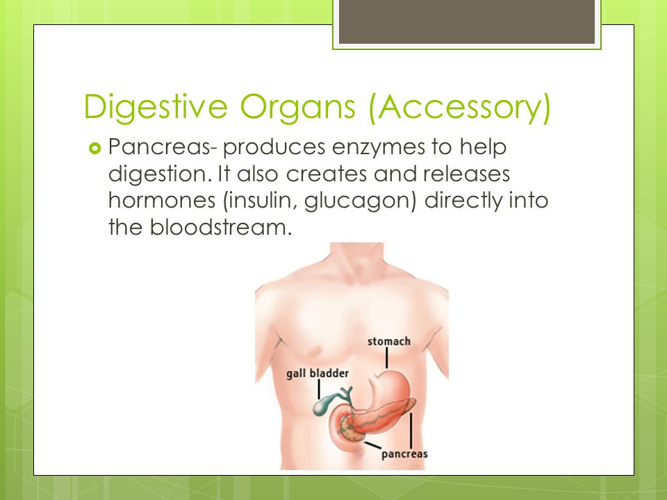 Digestive Organs (Accessory)  Pancreas- produces enzymes to help digestion. It also creates and releases hormones (insulin, glucagon) directly into t