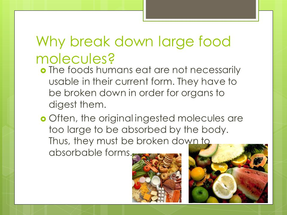 Why break down large food molecules?  The foods humans eat are not necessarily usable in their current form. They have to be broken down in order for
