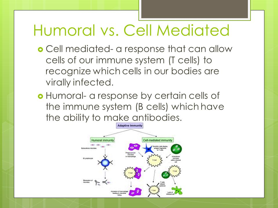 Humoral vs. Cell Mediated  Cell mediated- a response that can allow cells of our immune system (T cells) to recognize which cells in our bodies are v