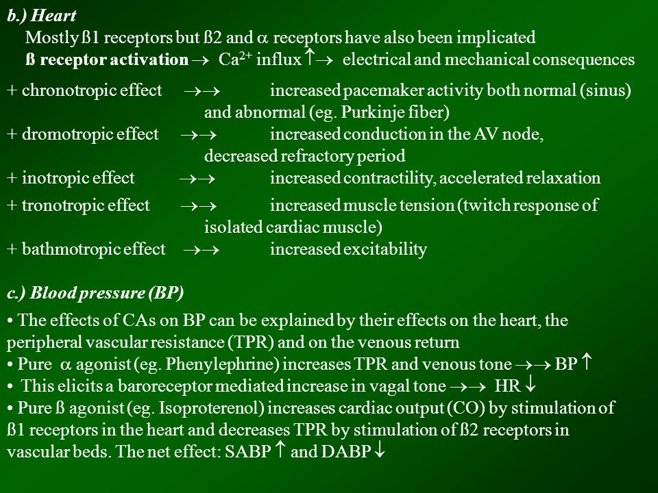 b.) Heart Mostly ß1 receptors but ß2 and  receptors have also been implicated ß receptor activation  Ca 2+ influx  electrical and mechanical consequences + chronotropic effect  increased pacemaker activity both normal (sinus) and abnormal (eg.