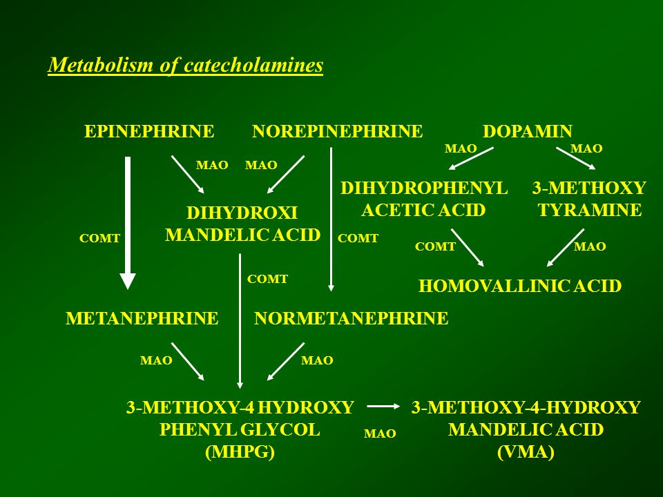 EPINEPHRINENOREPINEPHRINEDOPAMIN DIHYDROXI MANDELIC ACID DIHYDROPHENYL ACETIC ACID 3-METHOXY TYRAMINE METANEPHRINENORMETANEPHRINE 3-METHOXY-4 HYDROXY