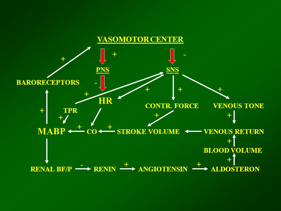VASOMOTOR CENTER PNSSNS HR MABP TPR BARORECEPTORS COSTROKE VOLUMEVENOUS RETURN RENAL BF/PRENINANGIOTENSINALDOSTERON BLOOD VOLUME VENOUS TONECONTR. FOR