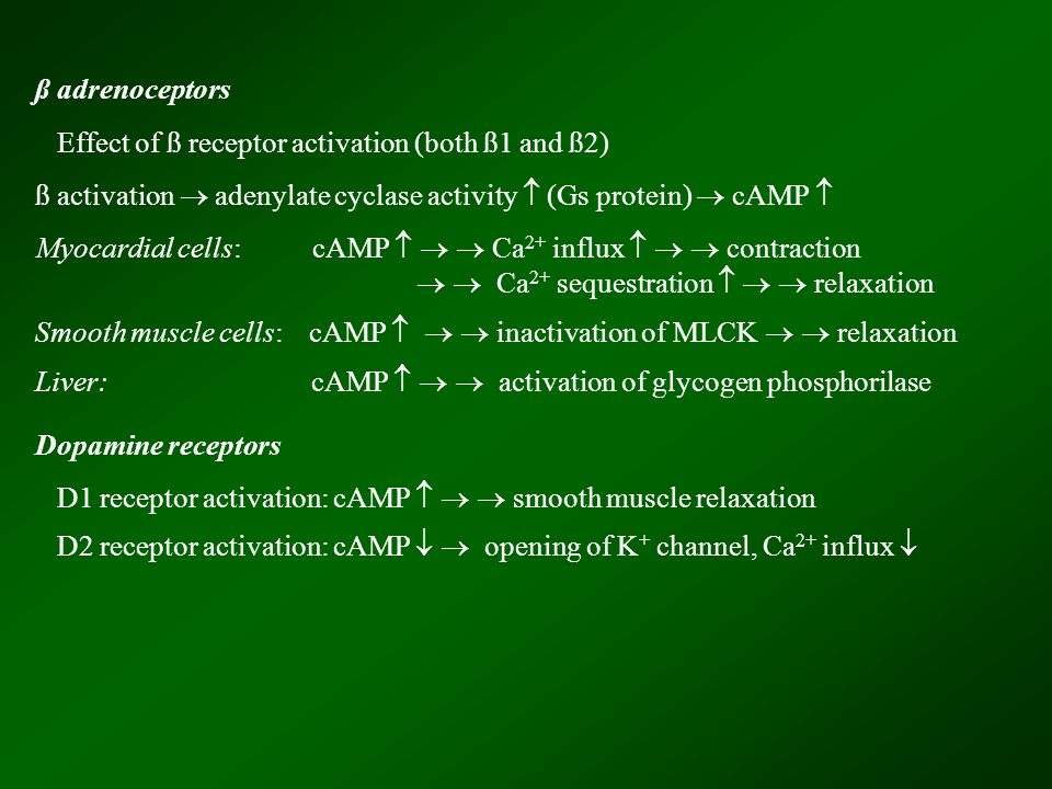 ß adrenoceptors Effect of ß receptor activation (both ß1 and ß2) ß activation  adenylate cyclase activity  (Gs protein)  cAMP  Myocardial cells: c