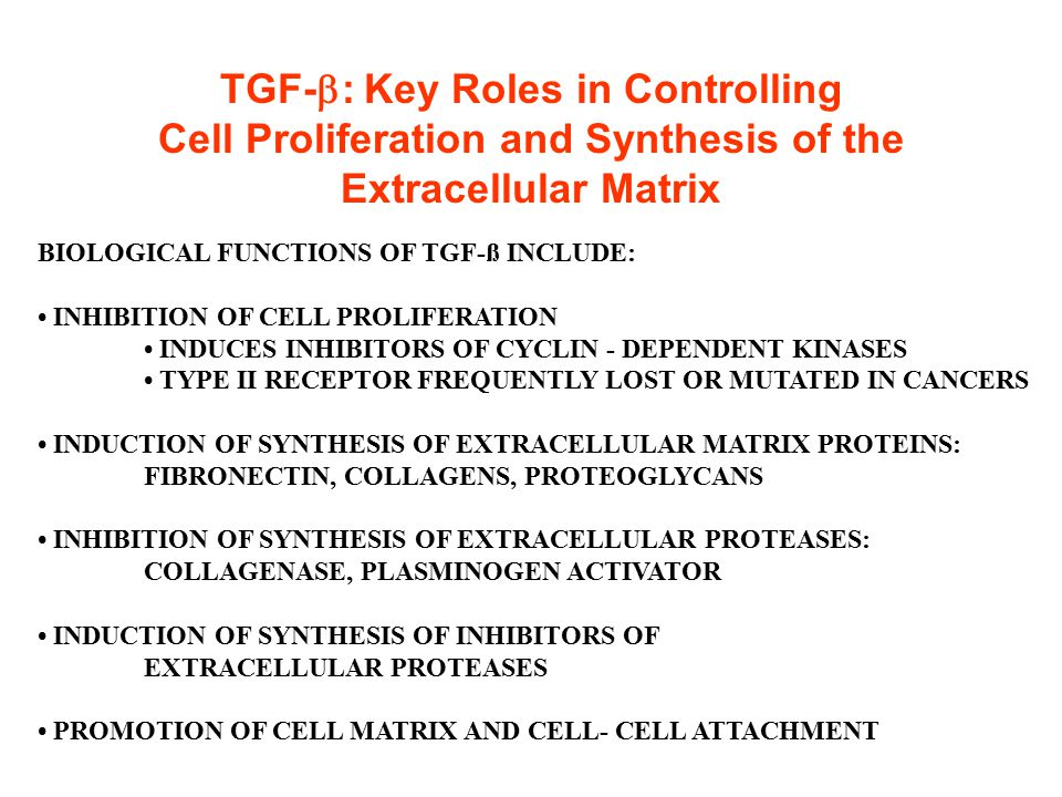 TGF-  : Key Roles in Controlling Cell Proliferation and Synthesis of the Extracellular Matrix BIOLOGICAL FUNCTIONS OF TGF-ß INCLUDE: INHIBITION OF CE