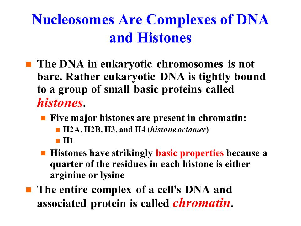Nucleosomes Are Complexes of DNA and Histones The DNA in eukaryotic chromosomes is not bare.
