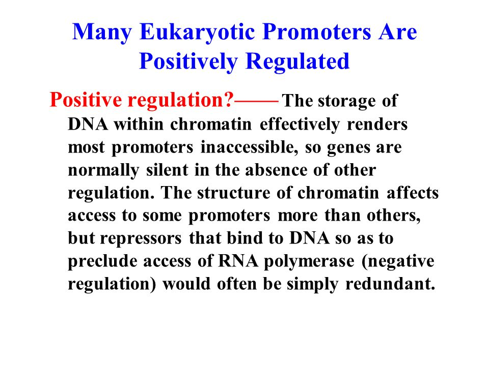 Many Eukaryotic Promoters Are Positively Regulated Positive regulation —— The storage of DNA within chromatin effectively renders most promoters inaccessible, so genes are normally silent in the absence of other regulation.