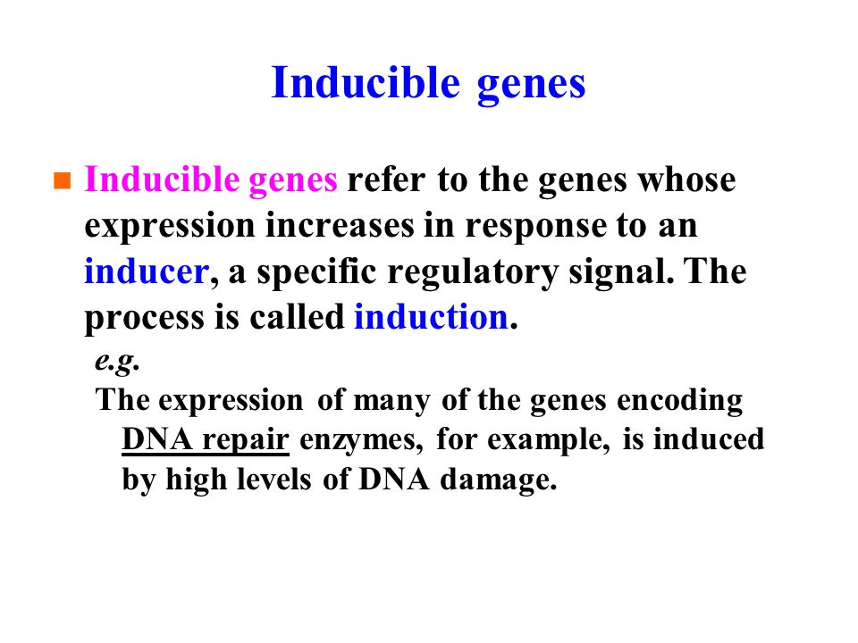 Inducible genes Inducible genes refer to the genes whose expression increases in response to an inducer, a specific regulatory signal.