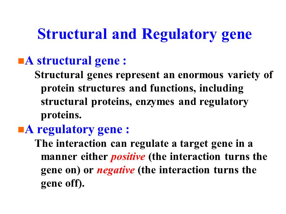Structural and Regulatory gene A structural gene : Structural genes represent an enormous variety of protein structures and functions, including structural proteins, enzymes and regulatory proteins.