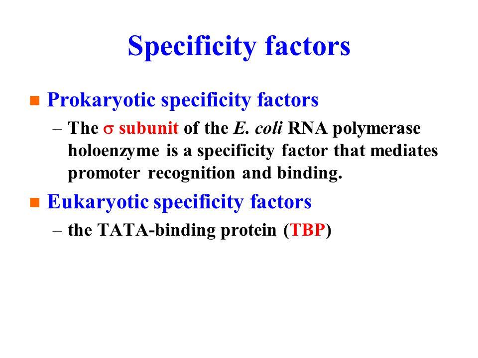 Specificity factors Prokaryotic specificity factors –The  subunit of the E.