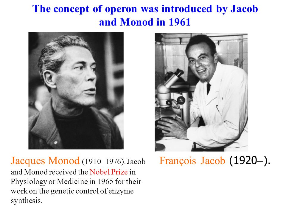 François Jacob (1920 – ). Jacques Monod (1910–1976).