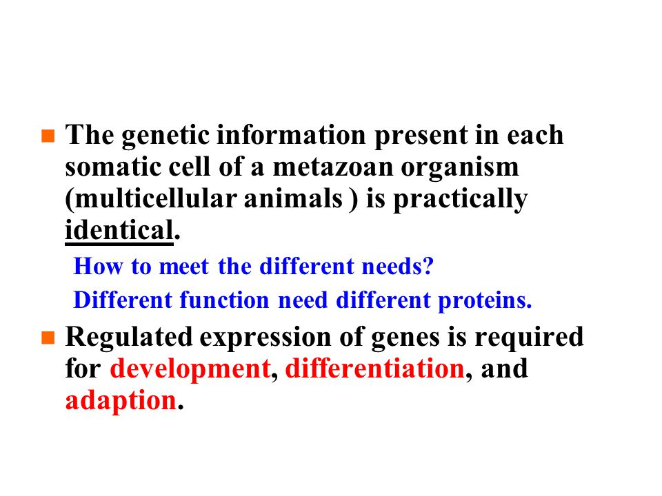 The genetic information present in each somatic cell of a metazoan organism (multicellular animals ) is practically identical.