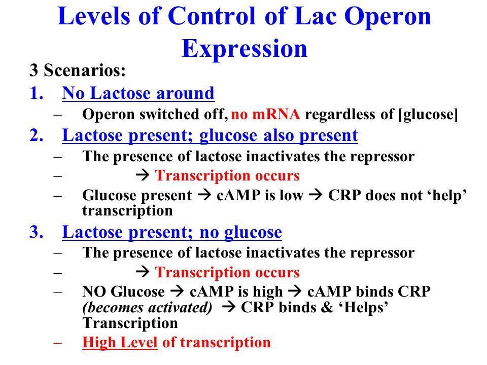 Levels of Control of Lac Operon Expression 3 Scenarios: 1.No Lactose around –Operon switched off, no mRNA regardless of [glucose] 2.Lactose present; glucose also present –The presence of lactose inactivates the repressor –  Transcription occurs –Glucose present  cAMP is low  CRP does not 'help' transcription 3.Lactose present; no glucose –The presence of lactose inactivates the repressor –  Transcription occurs –NO Glucose  cAMP is high  cAMP binds CRP (becomes activated)  CRP binds & 'Helps' Transcription –High Level of transcription