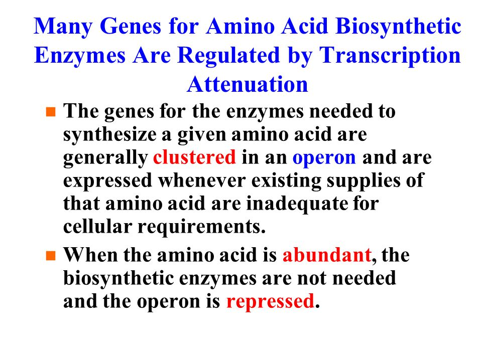 Many Genes for Amino Acid Biosynthetic Enzymes Are Regulated by Transcription Attenuation The genes for the enzymes needed to synthesize a given amino acid are generally clustered in an operon and are expressed whenever existing supplies of that amino acid are inadequate for cellular requirements.