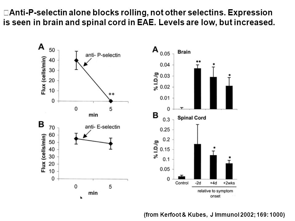 (from Kerfoot & Kubes, J Immunol 2002; 169: 1000) Anti-P-selectin alone blocks rolling, not other selectins. Expression is seen in brain and spinal co