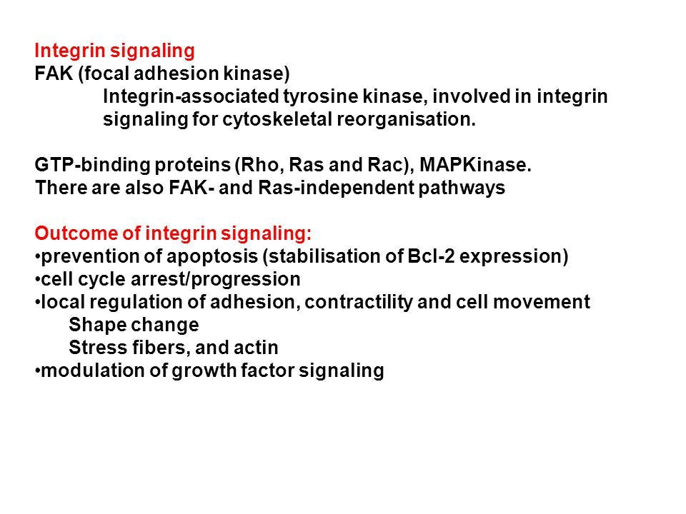 Integrin signaling FAK (focal adhesion kinase) Integrin-associated tyrosine kinase, involved in integrin signaling for cytoskeletal reorganisation.