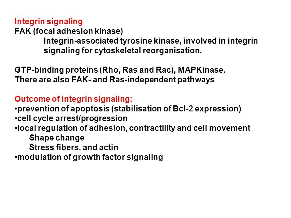 Ras PI-3-K Rac Rho PIP-5-K PIP2 Profilin Gelsolin Vinculin Rho-K Myosin phosphatase Focal adhesions Stress fibers Integrin signaling 101 FAK   (from Kumar, CC.