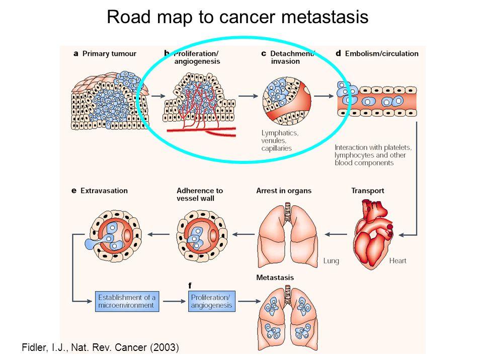 Fidler, I.J., Nat. Rev. Cancer (2003) Road map to cancer metastasis