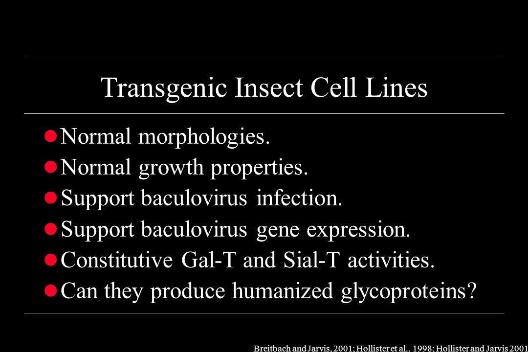 Creating Transgenic Insect Cell Lines l Constructed pIE1ß4GalT, pIE1ST6, pIE1Neo.