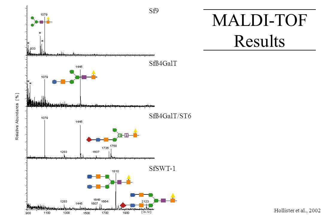 HPAEC-PAD Results SialylGalGlcNAcM3F SialylGalGlcNAc 2 M3F GalGlcNAc 2 M3F M3 M3F GalGlcNAcM3F Sf9 Sfß4GalT Sfß4GalT/ST6 SfSWT-1 Hollister et al., 2002