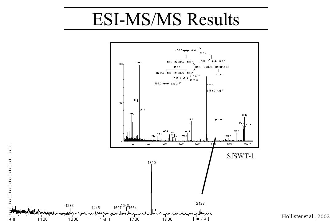 1810 2123 1664 16481283 14451607 SfSWT-1 ESI-MS/MS Results Hollister et al., 2002