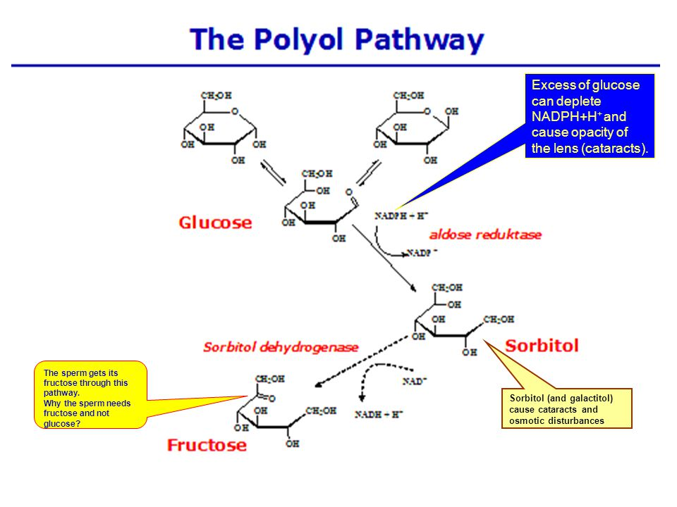 18 Glycogen synthase only adds glucoses to an existing chain of at least 4 glucose residues.
