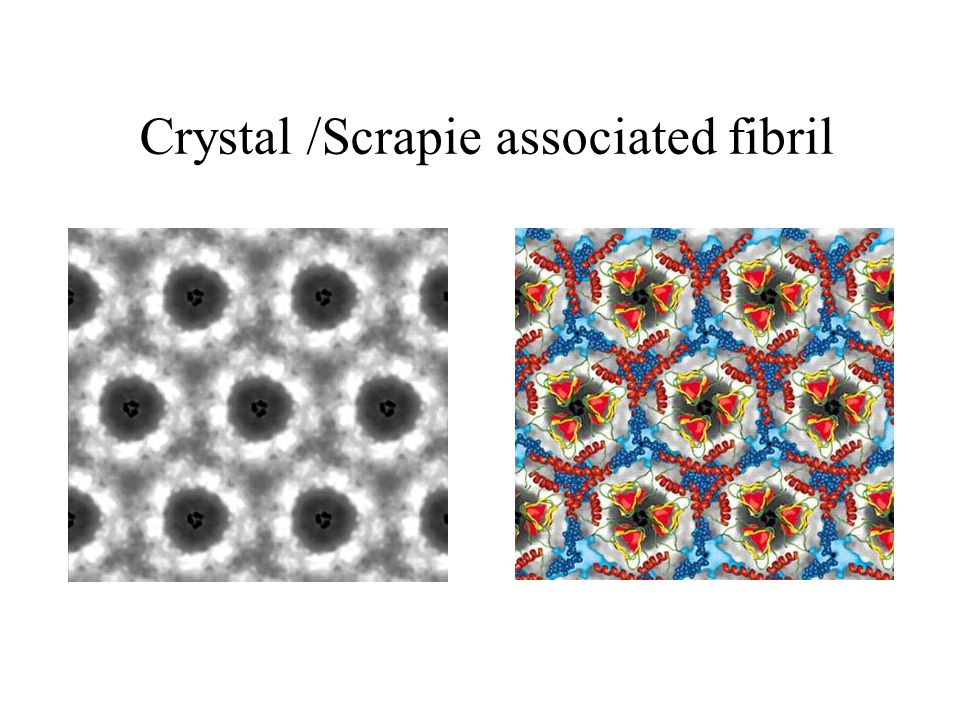 Crystal /Scrapie associated fibril