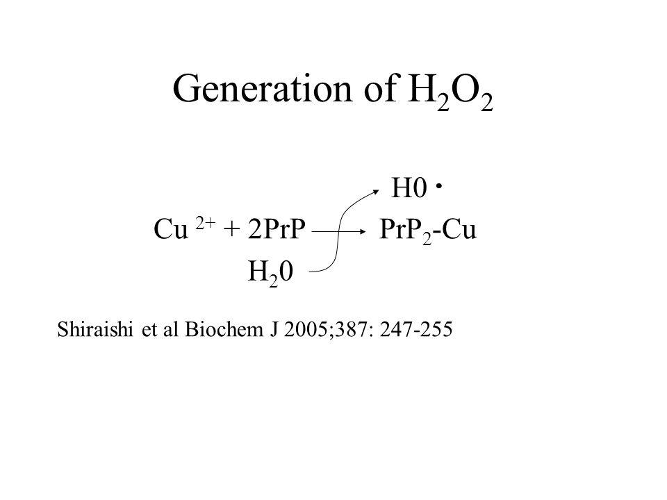 Generation of H 2 O 2 Cu 2+ + 2PrP PrP 2 -Cu Shiraishi et al Biochem J 2005;387: 247-255 H20H20 H0 ·