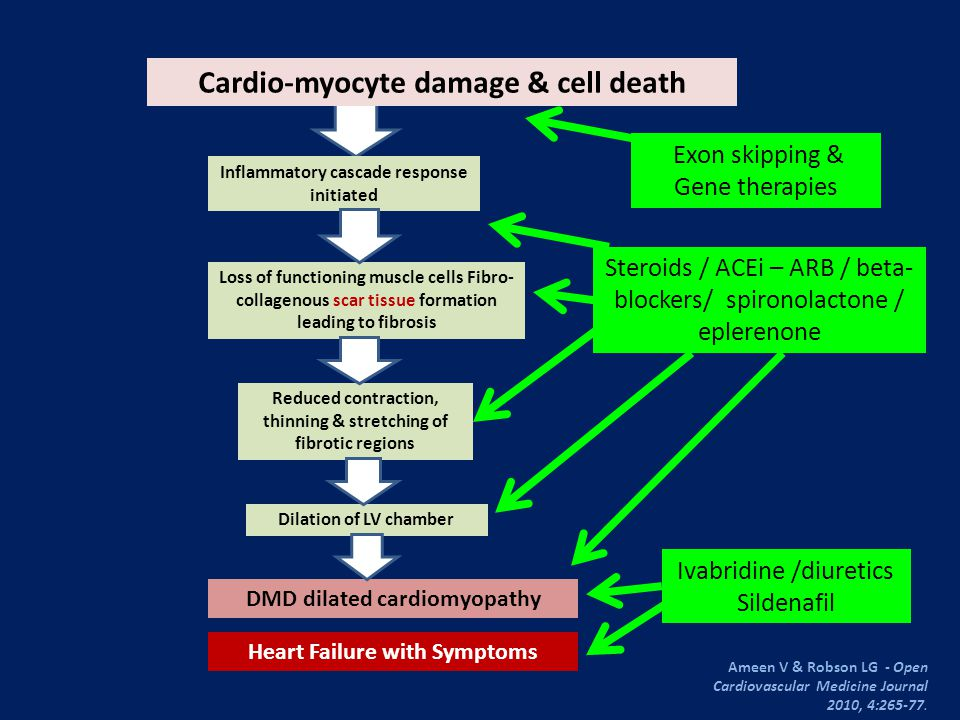 Steroid effects & the heart in DMD Silversides et al, 2003Markham et al, 2005 Steroid agentDeflazacort vs NeverAny steroid vs Never DesignRetrospective Age of starting Rx8.4 + 2 yrs< 21 yrs Duration of Rx> 3 yrs--- Patient Number33111 Evaluation methodEchocardiogram Results Steroid (+) vs (-) Lost ambulation48% vs 100% Cardio-active Rx LVEF < 45% LVFS% LVESD (mm) 10% vs 42% 5% vs 58% 33 + 7% vs 21 + 8% 30 + 6 vs 37 + 8 Lower if steroid (-) < 10 yrs x 4.4 FS% < 28 > 10 yrs x 15 Freedom from cardiomyopathy 93% vs 53%