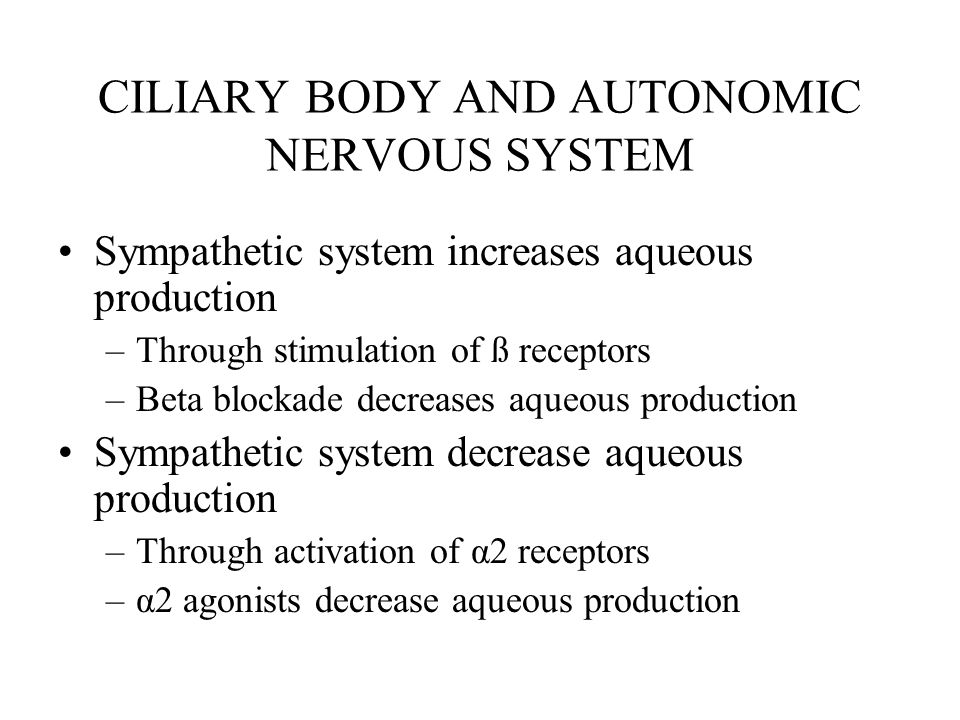 CILIARY BODY AND AUTONOMIC NERVOUS SYSTEM Sympathetic system increases aqueous production –Through stimulation of ß receptors –Beta blockade decreases