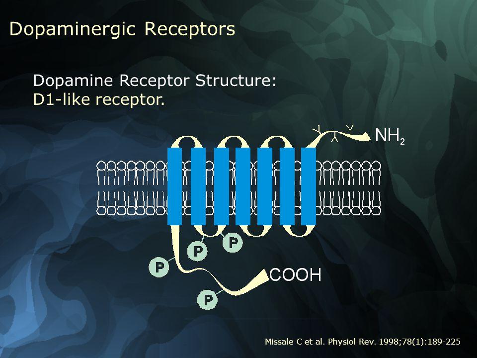 Dopaminergic Receptors Dopamine Receptor Structure: D1-like receptor.