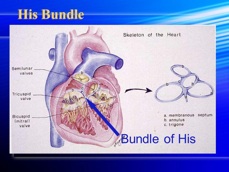 His Bundle Bundle of His
