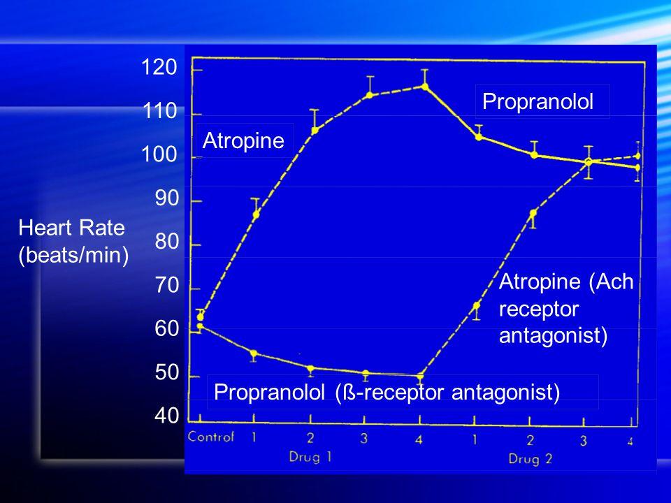 120 110 100 60 90 70 80 50 40 Heart Rate (beats/min) Atropine Atropine (Ach receptor antagonist) Propranolol (ß-receptor antagonist) Propranolol
