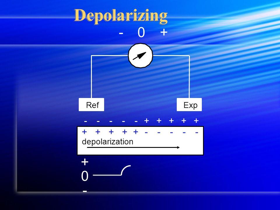 Depolarizing 0 + - +-0 RefExp +++++ -----+++++ ----- depolarization