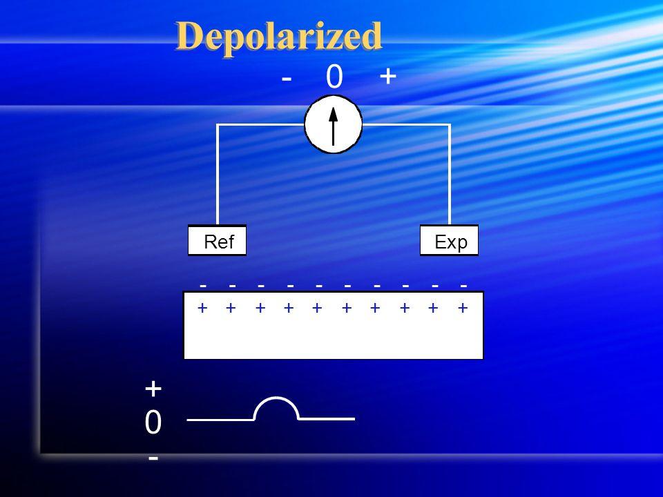 Depolarized +-0 RefExp ++++++++++ ---------- 0 + -