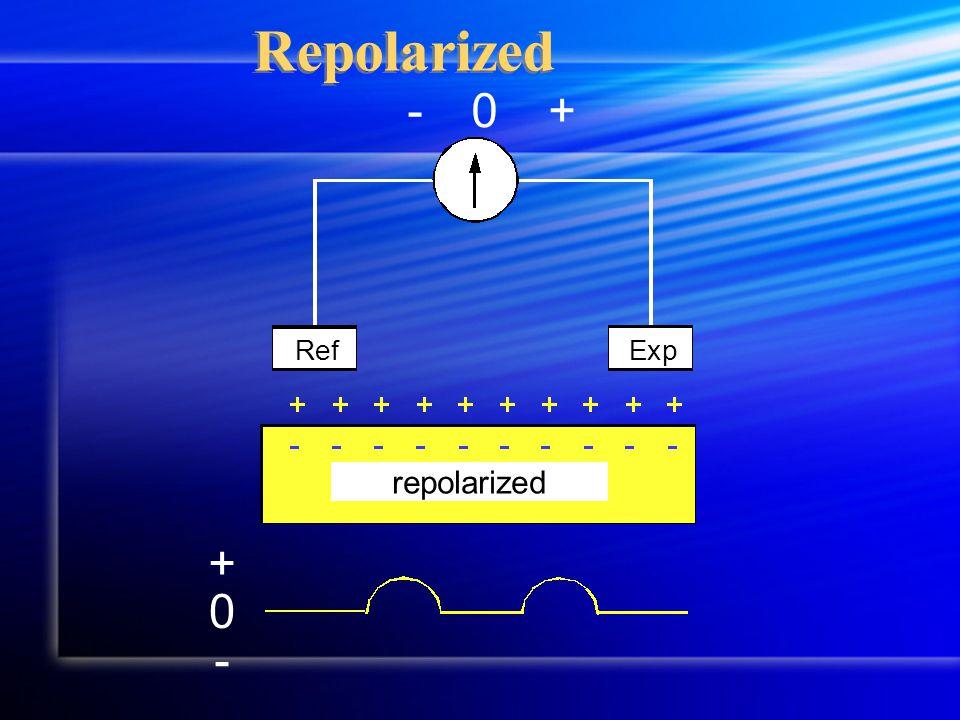 Repolarized +-0 RefExp 0 + - repolarized