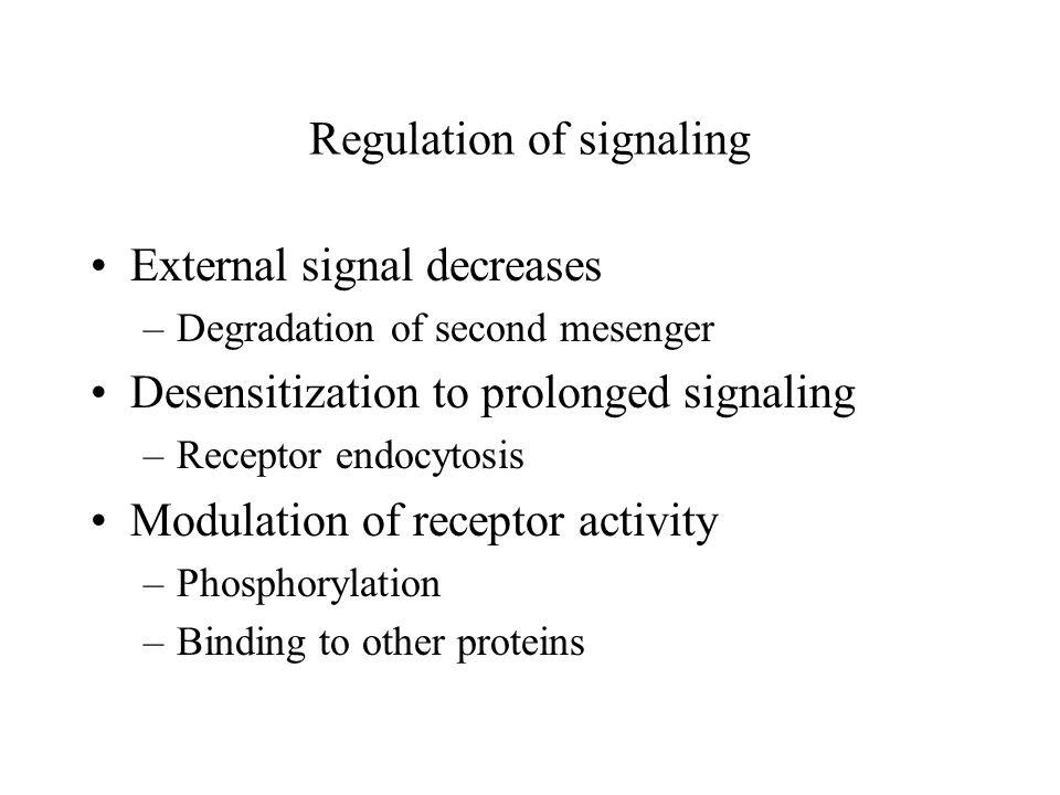 Regulation of signaling External signal decreases –Degradation of second mesenger Desensitization to prolonged signaling –Receptor endocytosis Modulation of receptor activity –Phosphorylation –Binding to other proteins